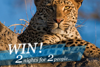 Win a two night stay for two people at Londolozi Game Reserve