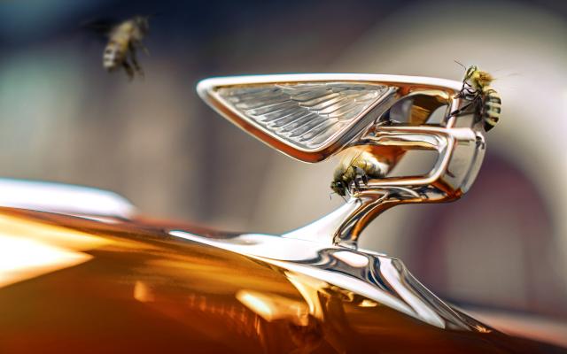 A Refreshing (Environmentally Friendly) Take On The 'Flying B'