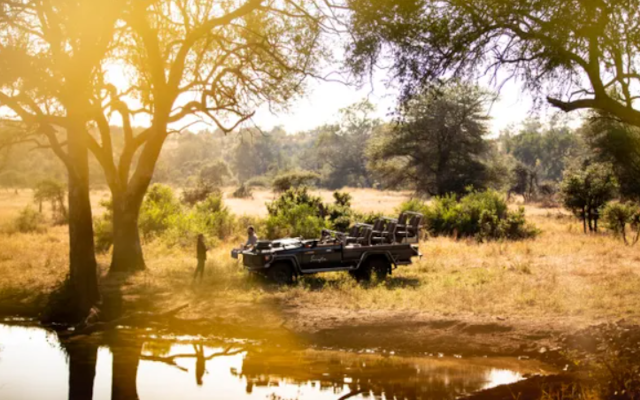 Singita's Brand-New Digital Experience Sets the Tone for the Future of Ecotourism